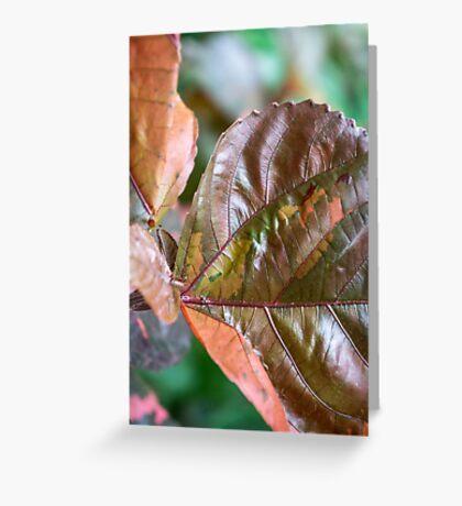 coloured foliage Greeting Card