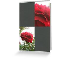 Red Rose with Light 1 Blank Q6F0 Greeting Card