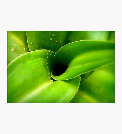 Rainglow Green Photographic Print