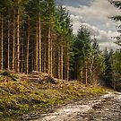 Road to Deforestation by Rustyoldtown