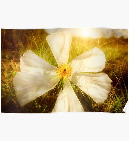 White Bright Poster