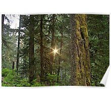 Olympic National Park, Washington State Poster