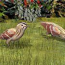 Texas Henslow's Sparrow (extinct) by Walter Colvin