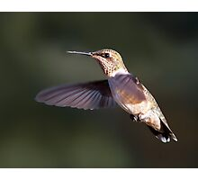 Hummer in My Backyard Photographic Print