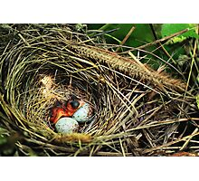 Bird Nest Photographic Print
