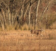 Stag in the Bosque by DWMMPhotography