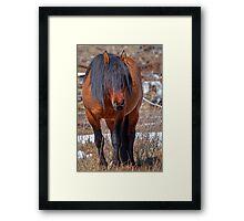 Shaggy Stallion Framed Print