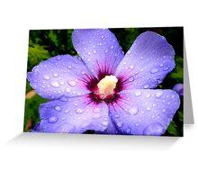 Hibiscus Syriacus ~ Rose of Sharon  Greeting Card