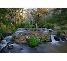 Spring Creek above Queen Mary Falls.  Photographic Print