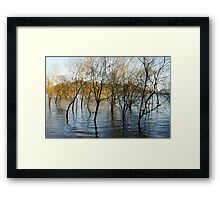 Lake Moogerah and trees. Framed Print