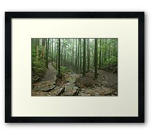 Rainforest track. D'Aguilar range. Queensland. Framed Print