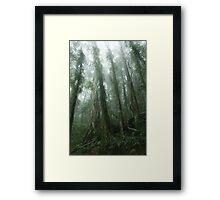 Rainforest mist. D'Aguilar range. Queensland. Framed Print