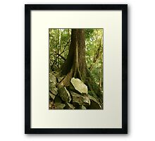 Cedar tree and rock. D'Aguilar range. Queensland. Framed Print