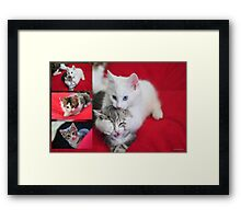 Kittens Framed Print