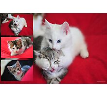 Kittens Photographic Print