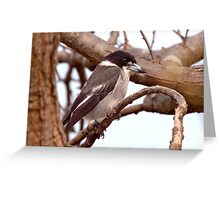 Butcher Bird Greeting Card
