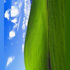 Classic Windows XP background by Ayhun