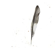 Sleeping With Sirens - Feel (Album Art - Feather) by melaniewoon