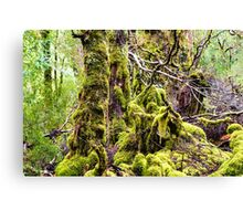 Weindorfer's Forest, Cradle Mountain,Tasmania Canvas Print