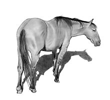 Horse in Pencil No. 2 Photographic Print