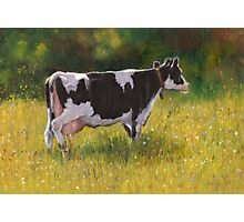 Holstein Cow in Oil Pastel Photographic Print
