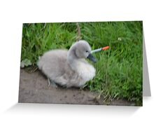 Animal Cruelty    Greeting Card