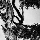 Bonsai at Botanical Gardens by JohnYoung