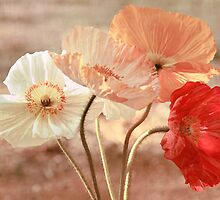 Poppies in Red, White & Peach by micklyn