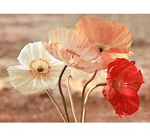 Poppies in Red, White & Peach Photographic Print