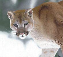 Puma in the Snow by Alina Kaplanov