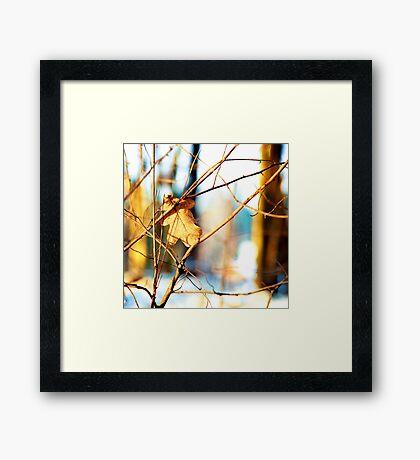 Oak leaf Framed Print