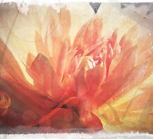 Antique Look Pretty Orange Flower Photograph by pastpresent