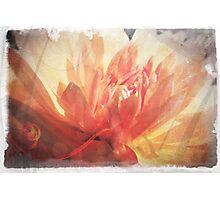 Antique Look Pretty Orange Flower Photograph Photographic Print