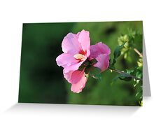 Hibiscus - Mallow Family Greeting Card