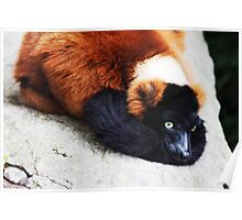 'Wildlife' Poster