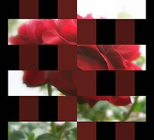 Red Rose with Light 1 Art Rectangles 15 by Christopher Johnson
