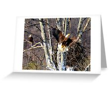 EAGLES AT NEST IN SYCAMORE TREE Greeting Card