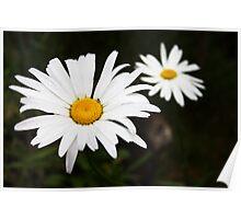 'Flower Macro' Poster