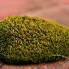 Moss by Estell
