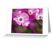Dogwood 1  Greeting Card