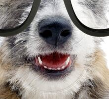 Jack Russel Terrier with Glasses Sticker