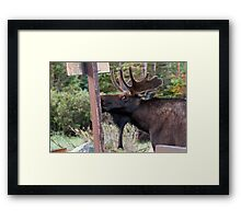Looking guilty Framed Print