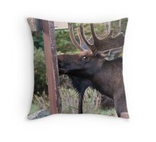 Looking guilty Throw Pillow
