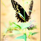 Butterfly Dancing by DottieDees