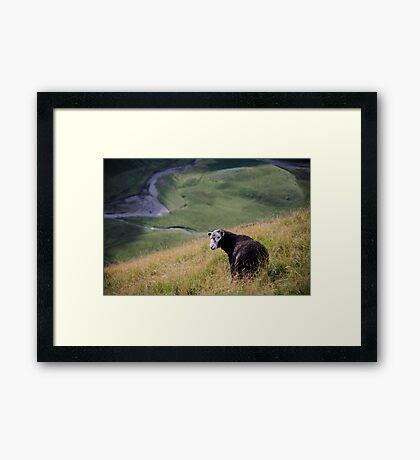 Sheepish, Lake District National Park Framed Print