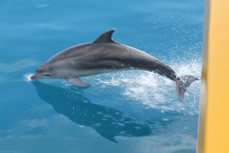Cheeky Dolphins by Wilparina