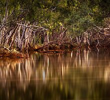 Riverside Reflections by Mieke Boynton