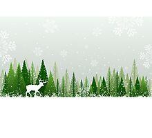 Winter forest scene Photographic Print
