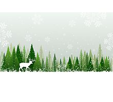 Winter forest scene Photographic Print