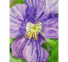 Alone - Purple Lavender Pansy Photographic Print